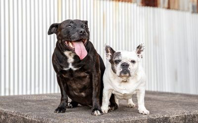 Abby & Lola – Sydney Dog Photography