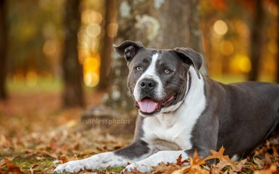 Autumn 2019 sessions – Canberra Dog Photos