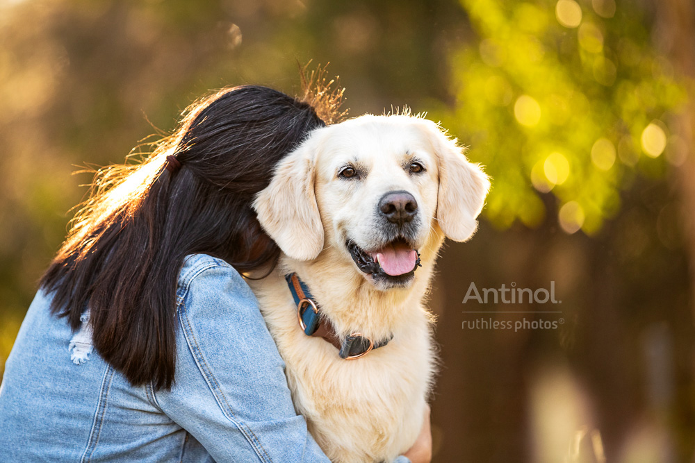 smiling golden retriever being hugged by female owner antinol