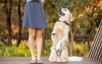 Antinol image library – Commercial Dog Photos