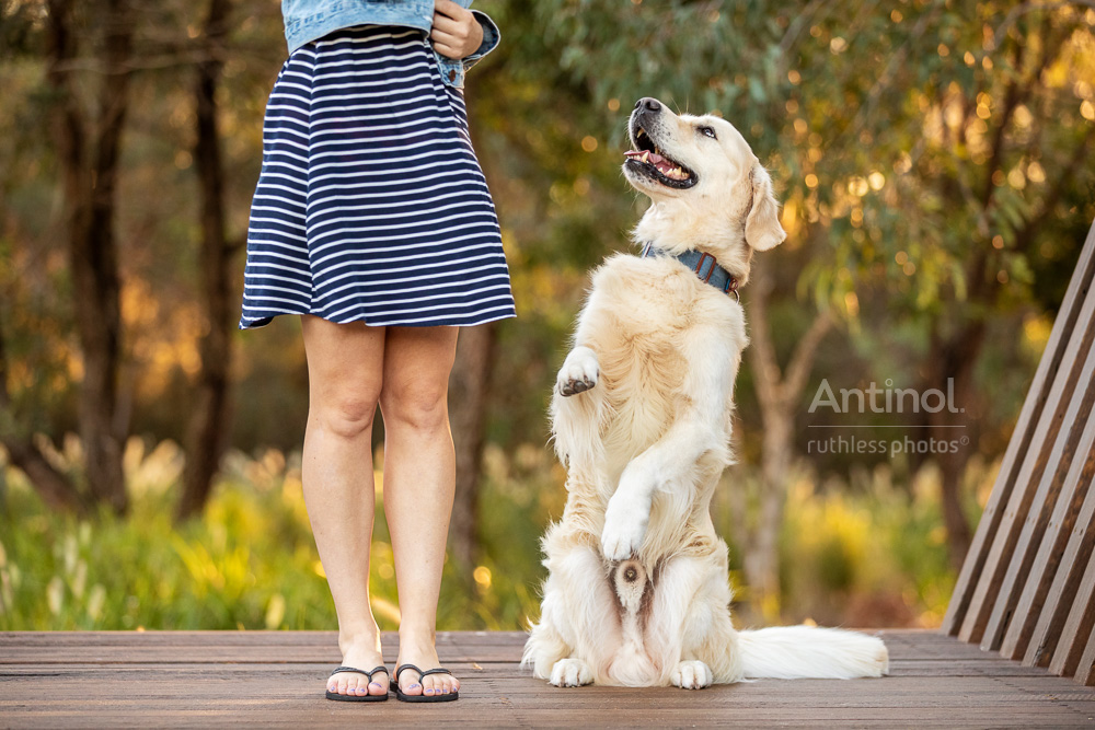 golden retriever sitting pretty beside girl in skirt antinol