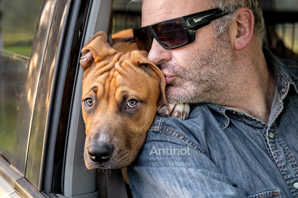 dave and butters pitbull in car kiss from dad antinol