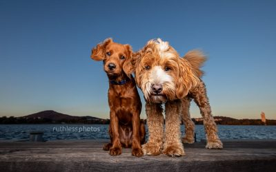 Pippin & Pockets – Canberra Pet Photos