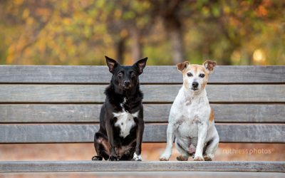 Mav and Taz – Canberra Dog Photography