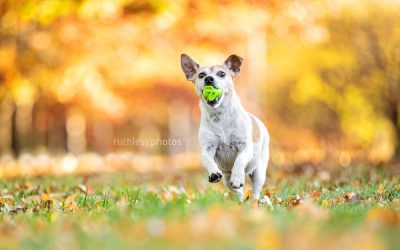 Autumn 2020 sessions – Canberra Dog Photos