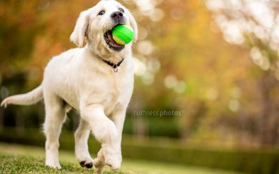 Snow – Sydney Pet Photographer