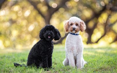 Will & Grace – Sydney Oodle Photographer