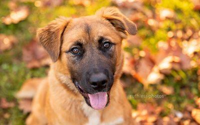 Adopt Me 03.19 – Rescue Dog Photos