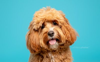 nuzzl – commercial dog photography sydney