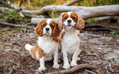 harry & kenny – sydney pet photography