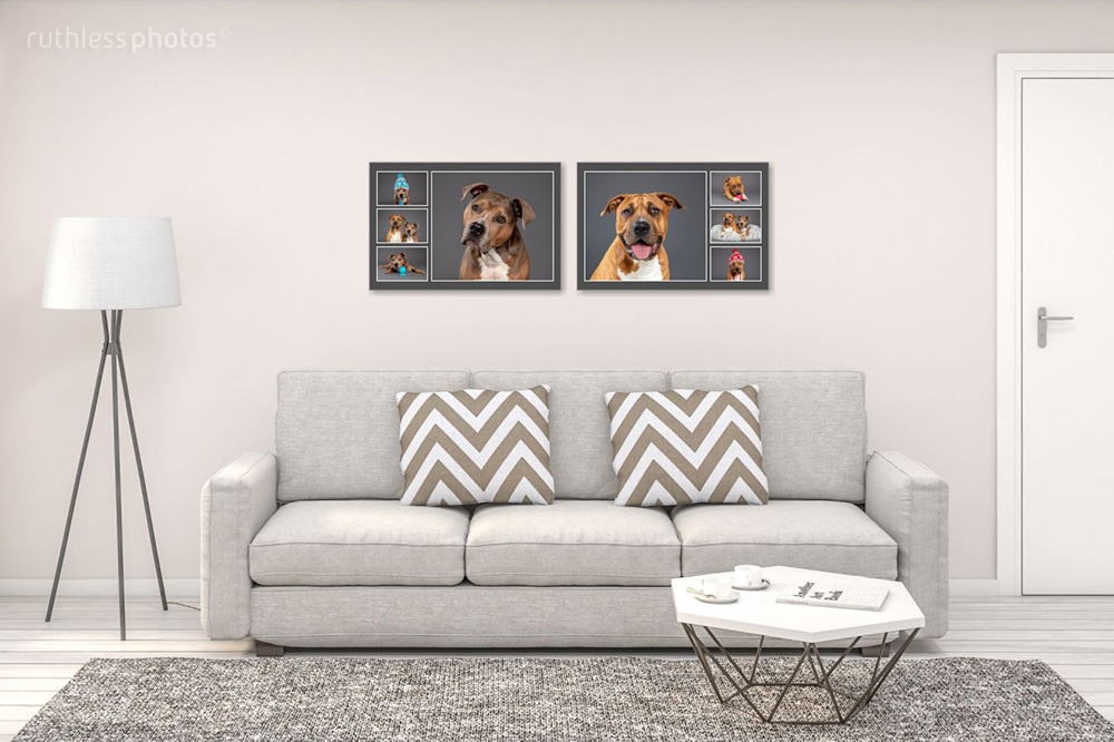 Lounge setting with two pit bull type dogs frames