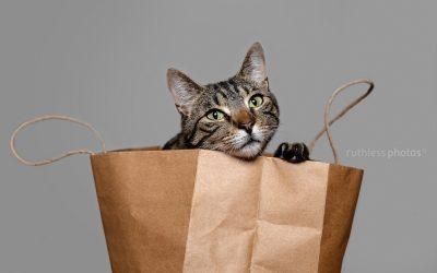 Catface (aka Giovanni) – Sydney Cat Photos