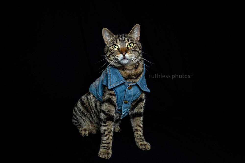 cat in denim vest jacket