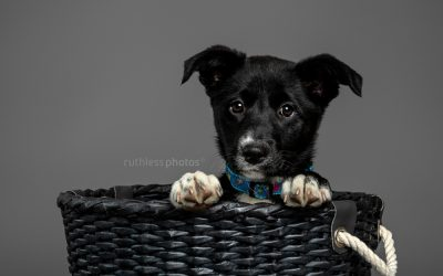 Adopt Me 04.19 – Rescue Dog Photos