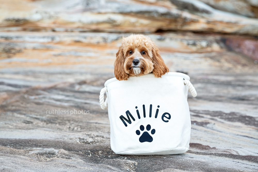 cute red toy cavoodle dog in personalised monogrammed bag