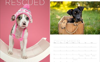 2020 fundraiser calendar – Sydney Pet Photography