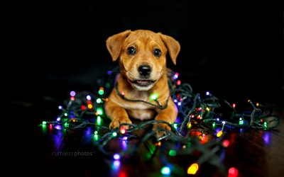 2019 Christmas offer – pet photography voucher