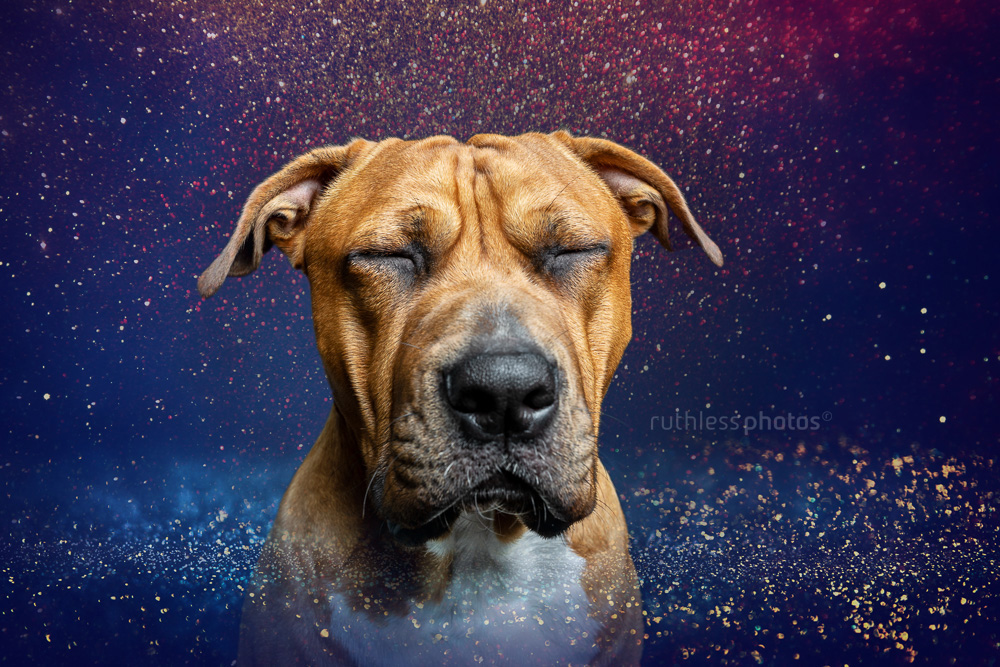 pit bull as cosmic being