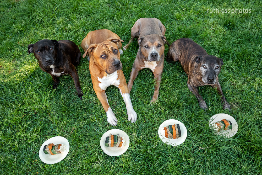 dog family birthday party with cake