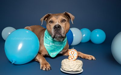 Birthday Season – Sydney Dog Photos