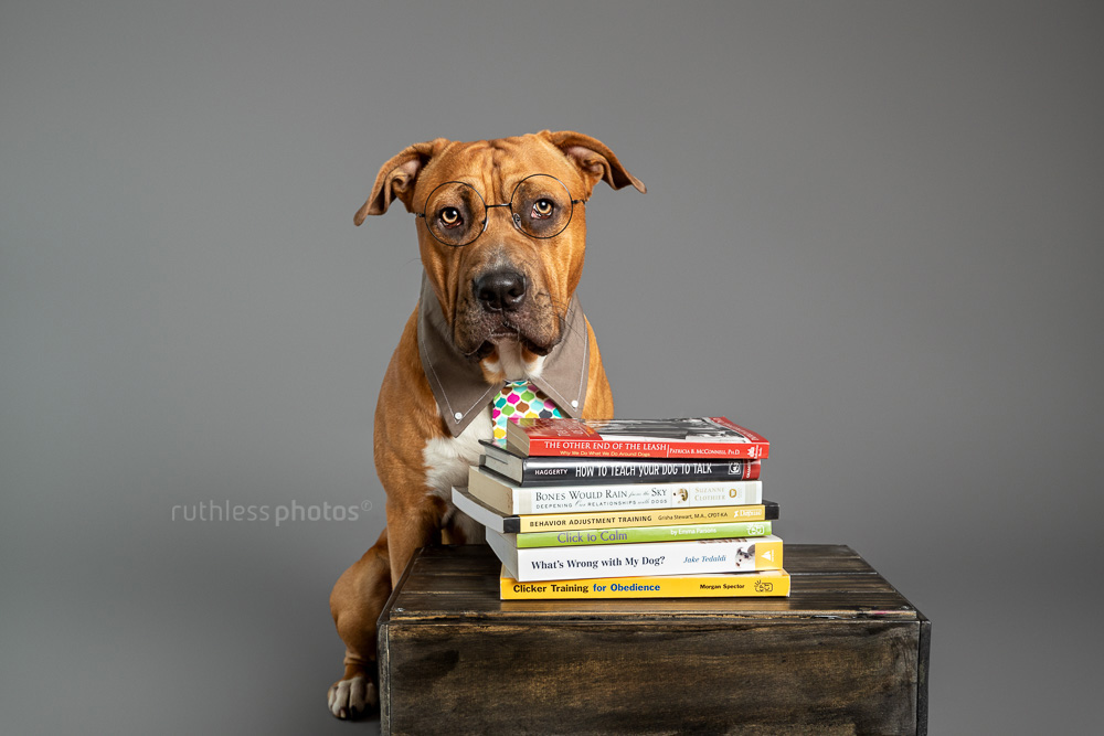 pit bull wearing glasses and tie with stack of dog training books