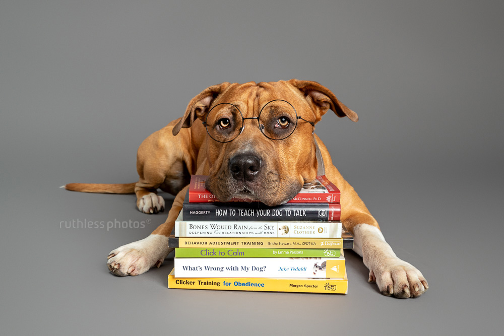 pit bull wearing glasses lying with head on pile of dog training books