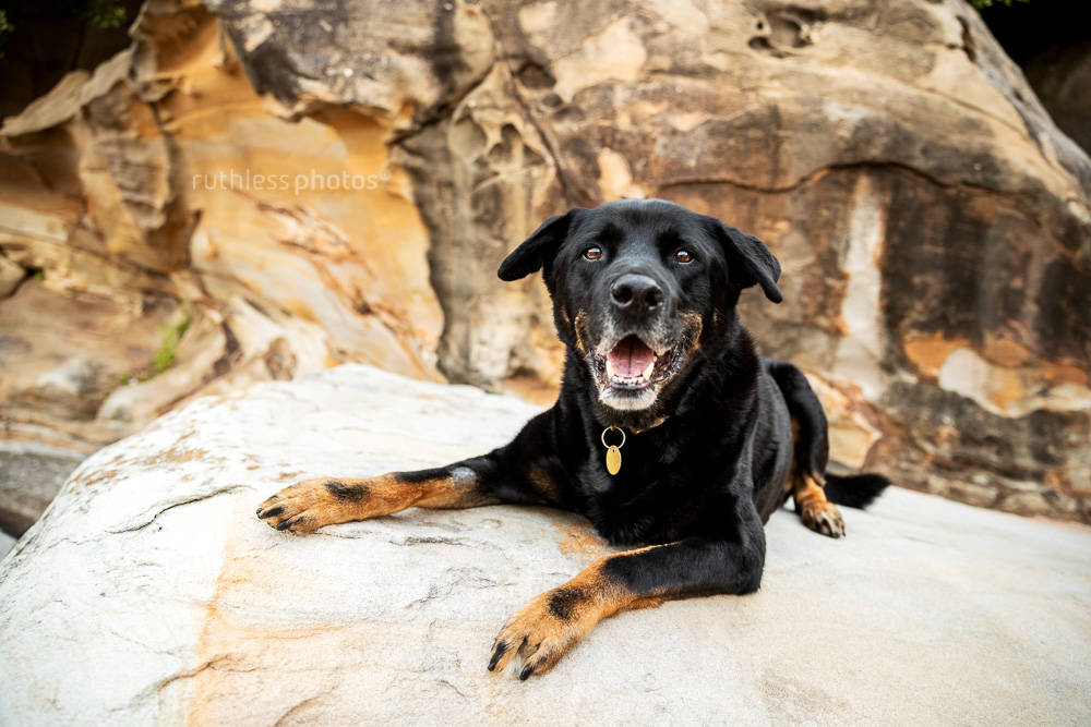 ares lying on rocks