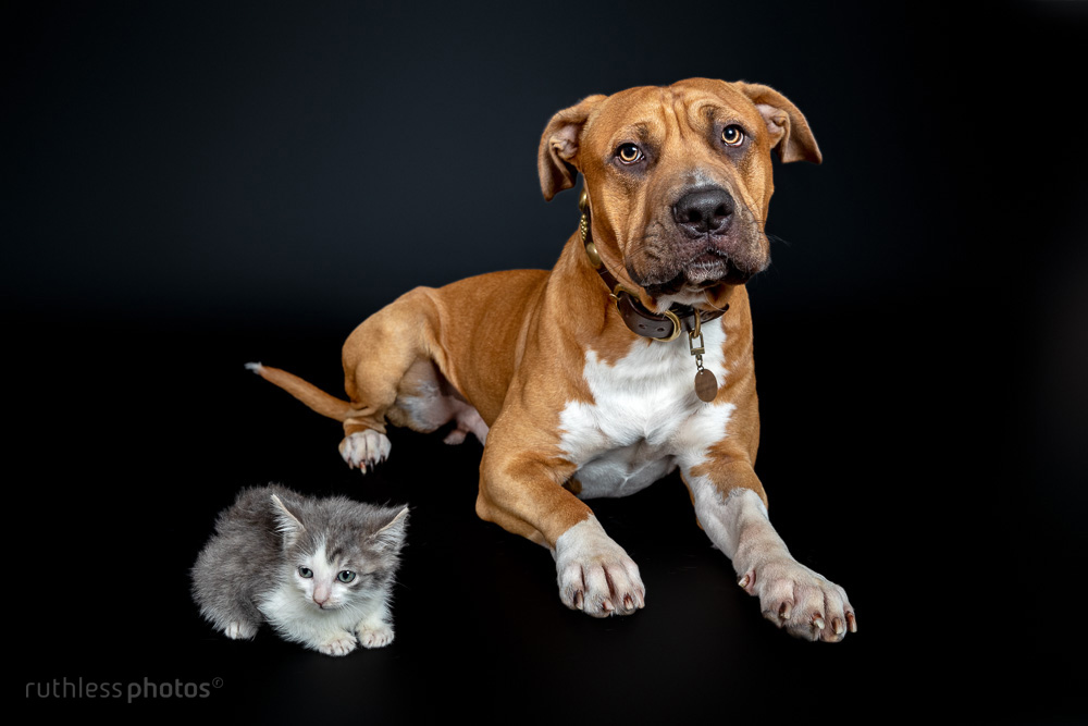 pittie and kitty