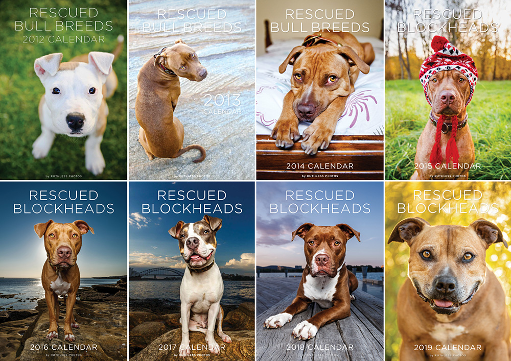pit bull and staffy type wall calendars