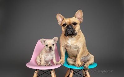 The Blumenthals – Sydney Dog Photography