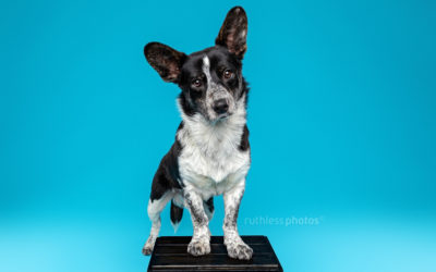 Adopt Me 05.20 – Rescue Dog Photographer