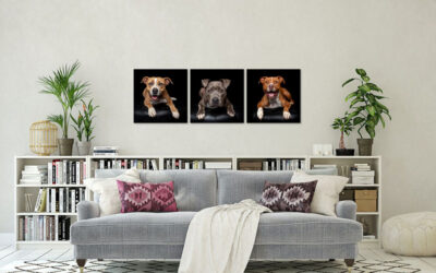 Huey, Nala & Chopper – Sydney Pet Photographer