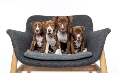 Adopt Me 06.20 – Rescue Puppy Photographer