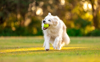 Testing Some New Gear – Sydney Pet Photography
