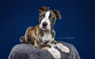 Adopt Me 09.20 – Adopt A Puppy Sydney