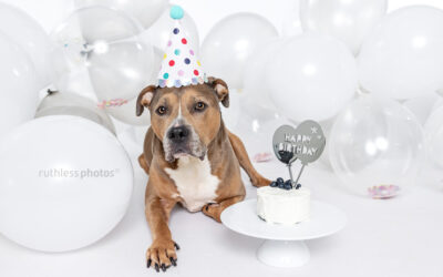 Dog Birthdays season – Sydney Dog Photography