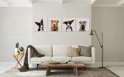 Strike, Zari, Kai and Peityn – Sydney Pet Photographer