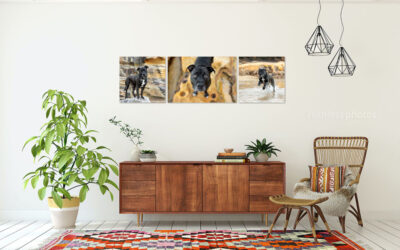 Recent Portrait Sessions 12.20 – Sydney Dog Photos