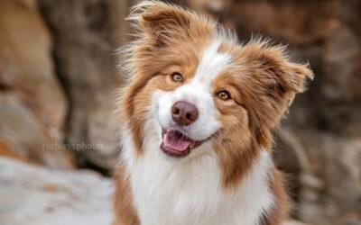 Remembering Keely – Sydney Dog Photography
