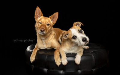 Charlie and Willow – Sydney Studio Dog Photos