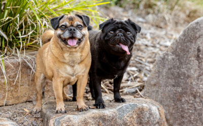Xavier and Charlie – Canberra Dog Photographer