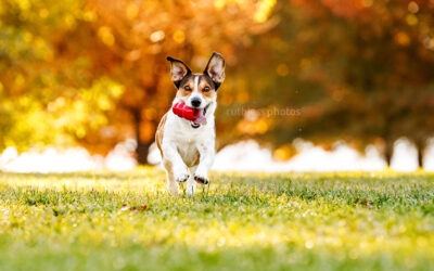 Autumn 2021 sessions – Canberra Dog Photos