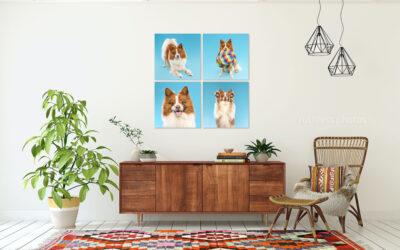 Benji, Bruce and Sheila | Sydney Pet Photos