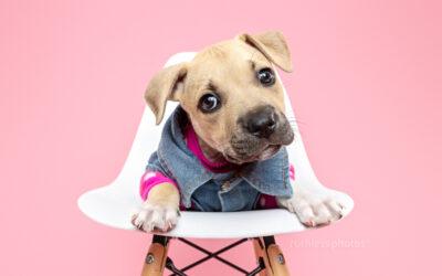hi Kazi, bye Kazi | Sydney Puppy Pictures