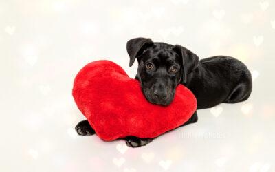 Adopt Me 02.21 – Rescue A Puppy Sydney