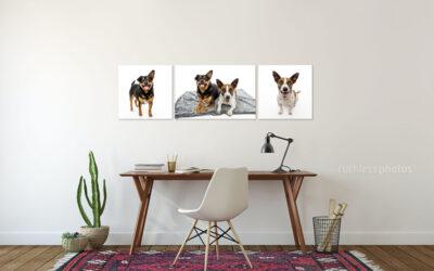 Recent Studio Sessions 02.21 – Sydney Dog Photos