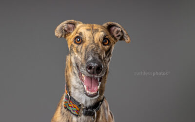 Adopt Me 03.21 – Adopt a Puppy Sydney