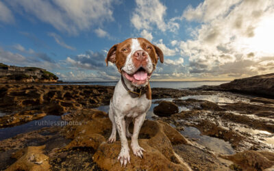 Pickle – Sydney Dog Photographer