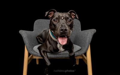 Adopt Me 05.21 – Adopt a Puppy Sydney