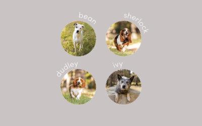 Bean, Sherlock, Dudley & Ivy – Canberra Pet Photos